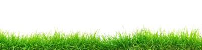 skinali iarba