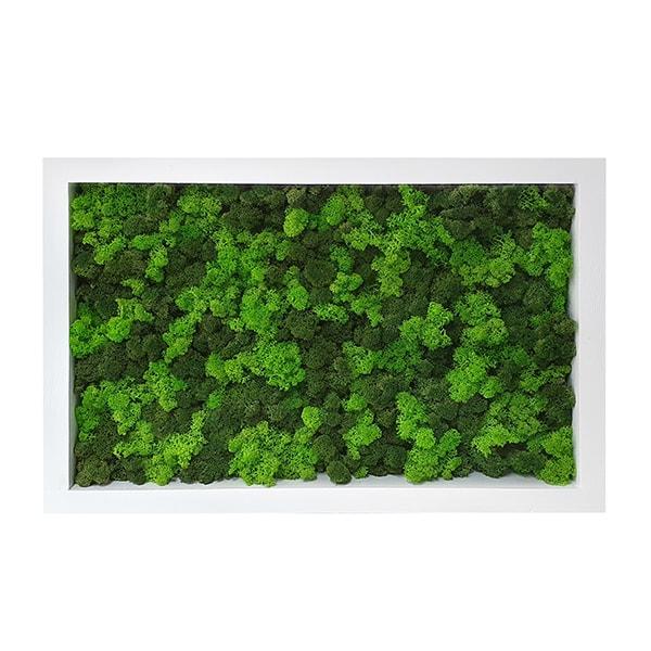 Tablou licheni plante stabilizate