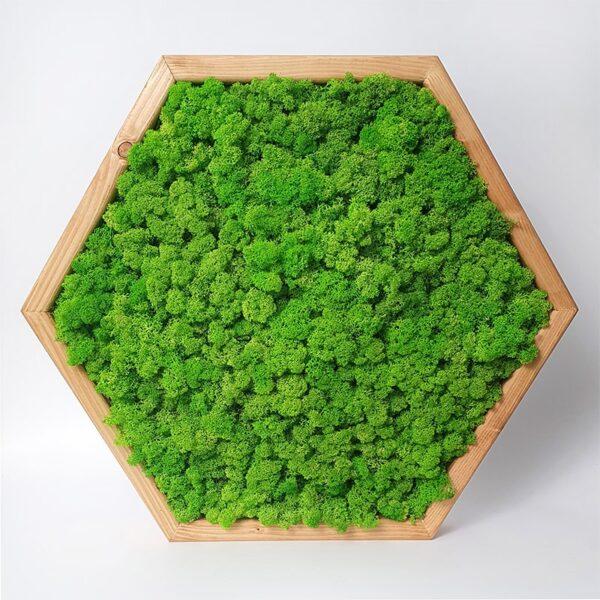 Set tablouri hexagonale cu muschi si licheni pentru decor