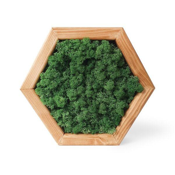 Tablou hexagonal cu licheni stabilizati 30 x 26 cm