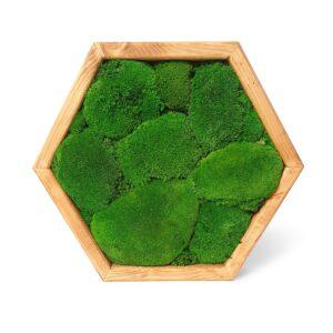 Tablou hexagonal cu licheni stabilizati 45 x 40 cm