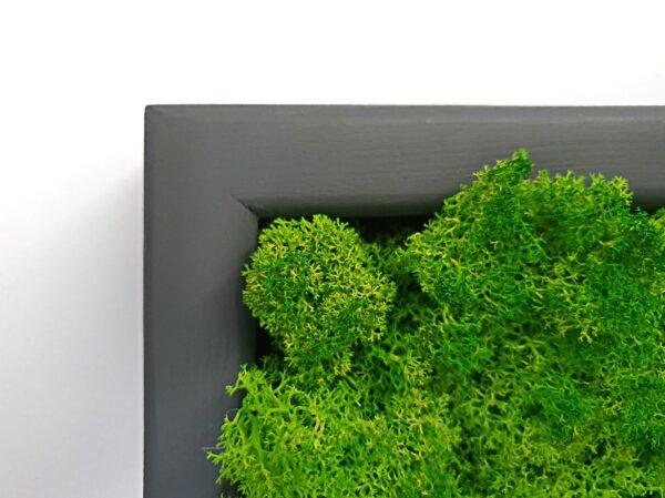 Set tablouri dreptunghiulare cu muschi si licheni 80 x 30 cm