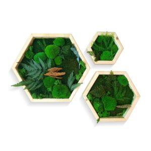 Set tablouri hexagonale cu muschi si plante stabilizate Skinali Decor