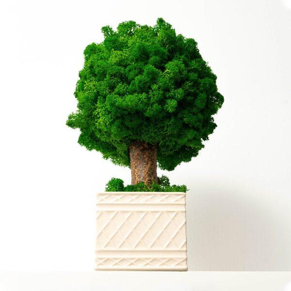 Copacel decorativ licheni stabilizati Skinali Decor