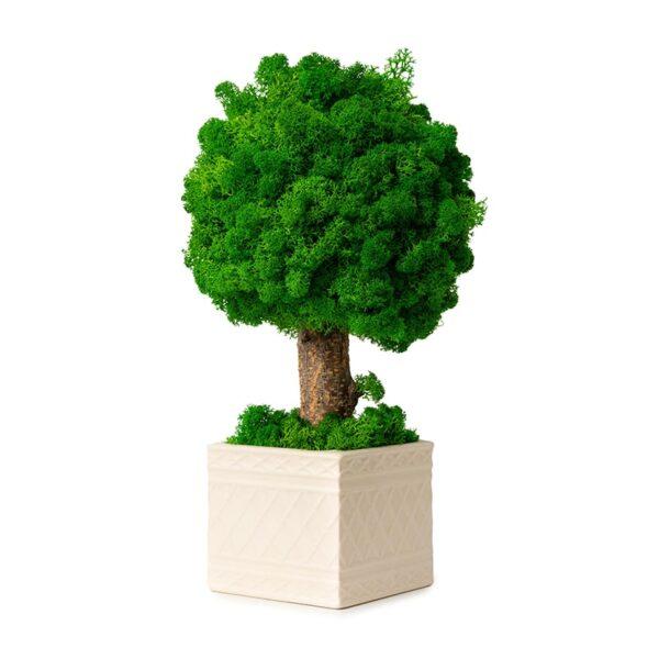 Copacel decorativ licheni stabilizati verde intens Skinali Decor