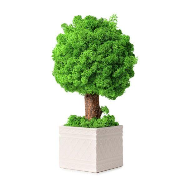 Copacel decorativ licheni stabilizati verde neon Skinali decor