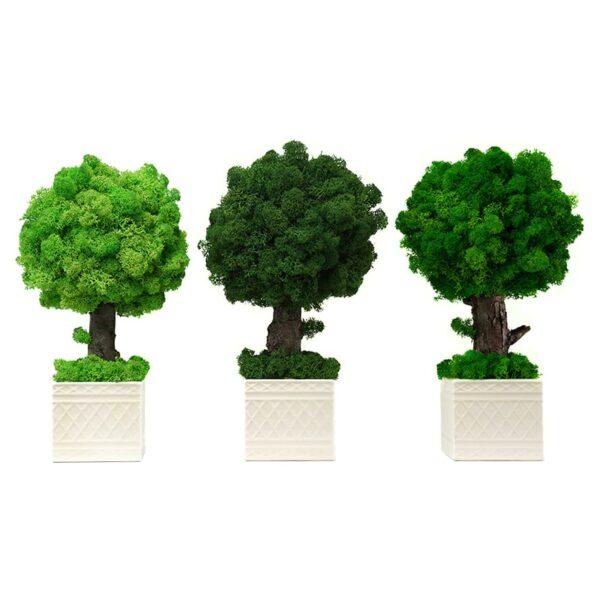 Set copacei decorativi cu licheni stabilizati Skinali Decor