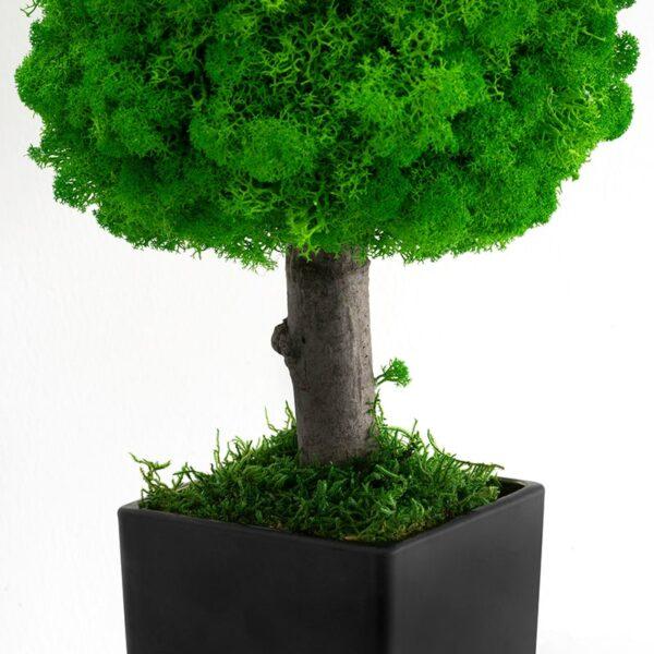 Copacel ornamental cu licheni stabilizati si mushi stabilizati in ghiveci negru 33 cm Skinali Decor