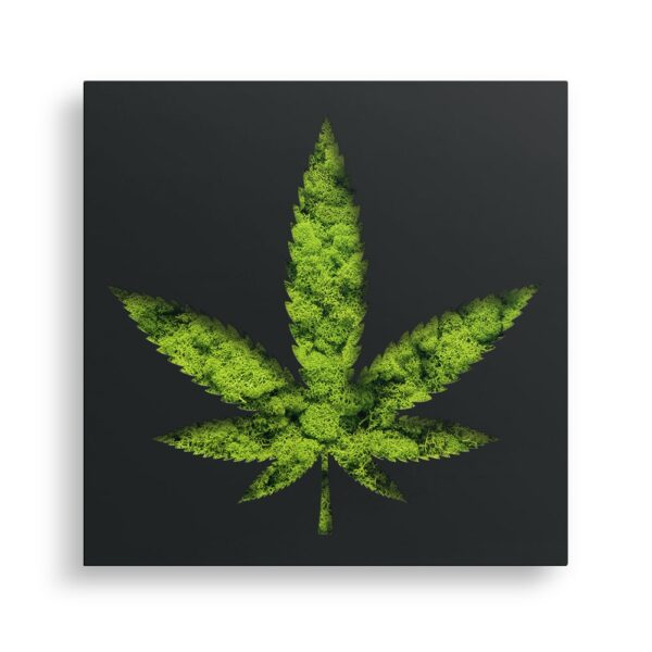 Decoratiune cu licheni Marijuana culoare negru 40x40x5cm Skinali Decor