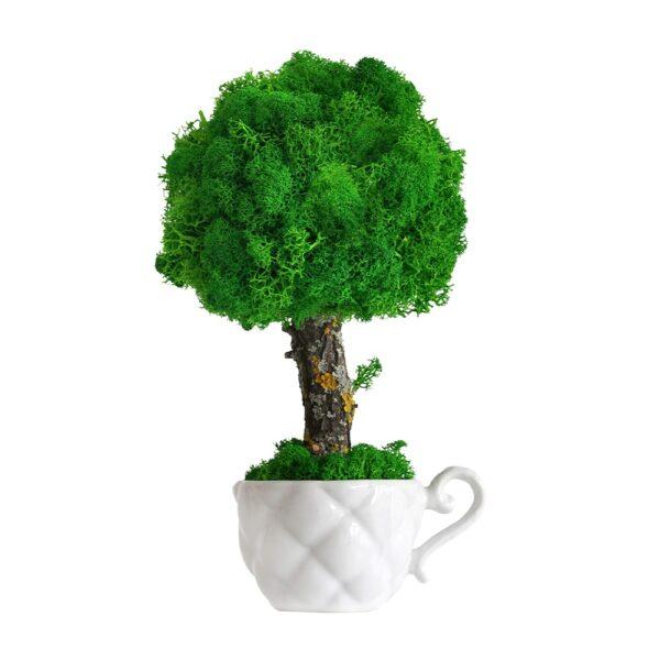 Copacel ornamental cu licheni stabilizati 22cm h verde intens in ceasca Skinali Decor